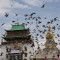many pigeon are flying at gandan monastery